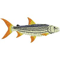 Image of pettigerfish200.jpg